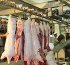 Quản lý giết mổ lợn, tiêu thụ sản phẩm từ lợn